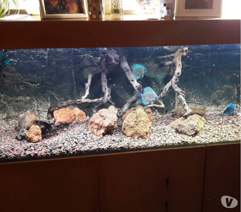 Photos Vivastreet Aquarium complet