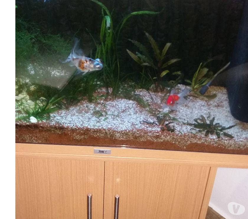 Photos Vivastreet aquarium jewel avec meuble