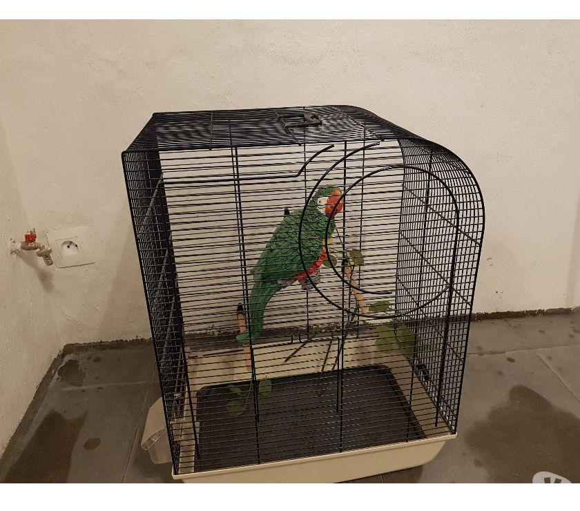 Photos Vivastreet cage avec reproduction de perroquet