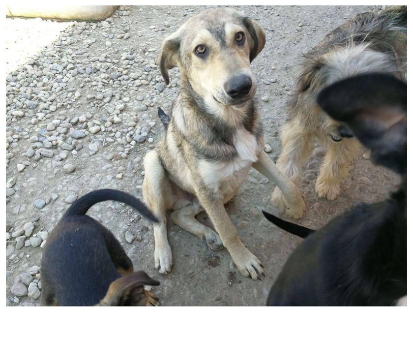 Photos Vivastreet Dobi gentil jeune chien en refuge
