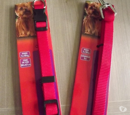 Photos Vivastreet lot collier + laisse chien 1-10 kg