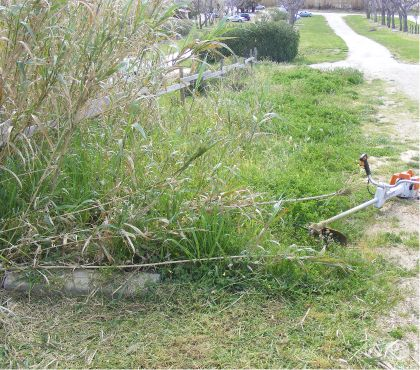 Photos Vivastreet Recherche entretien de petits jardinsdébroussaillage...