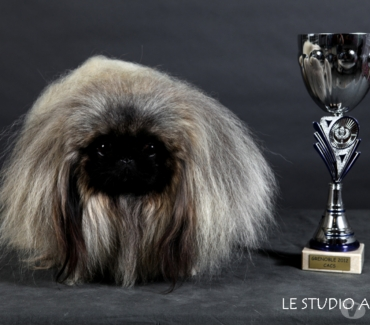 Photos Vivastreet CHIOTS PEKINOIS