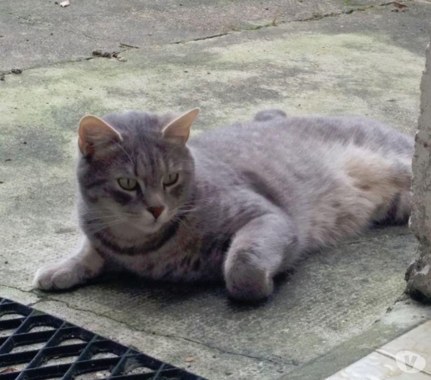 Photos Vivastreet PUCK - chat perdu sur Rennes (35)