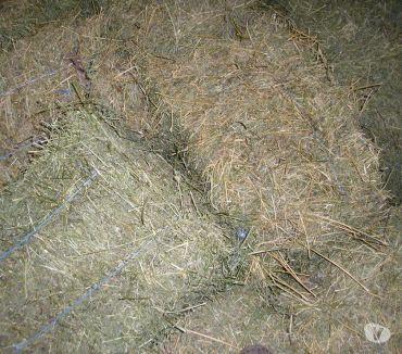 Photos Vivastreet fourrage en petites bottes bio c1 et paille de blé dispo