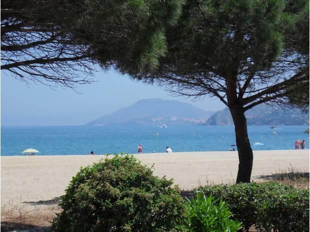 location saisonniere Pyrénées-Orientales Argeles sur Mer - 66700 - Photos Vivastreet . Argelès sur Mer Grand studio Front de Mer plage Sud à 40 m
