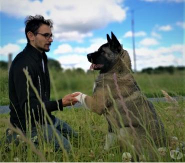 Photos Vivastreet Éducateur Comportementaliste Canin Félin – École du chiot