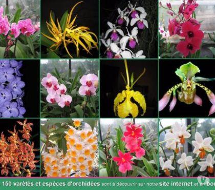 Photos Vivastreet Orchidées, Tillandsia, Epiphyllum, Carnivores (37)