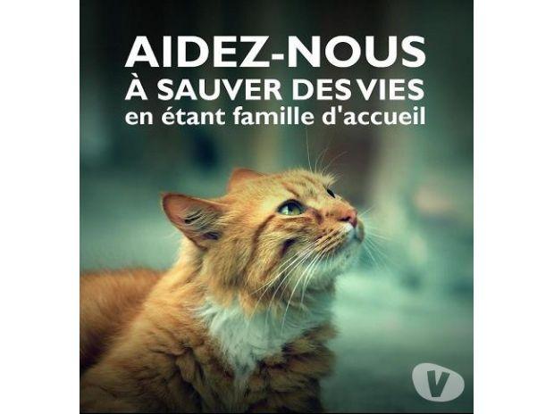 Photos Vivastreet Besoin de FA : on ne peut plus sauver de chats !! SOS !