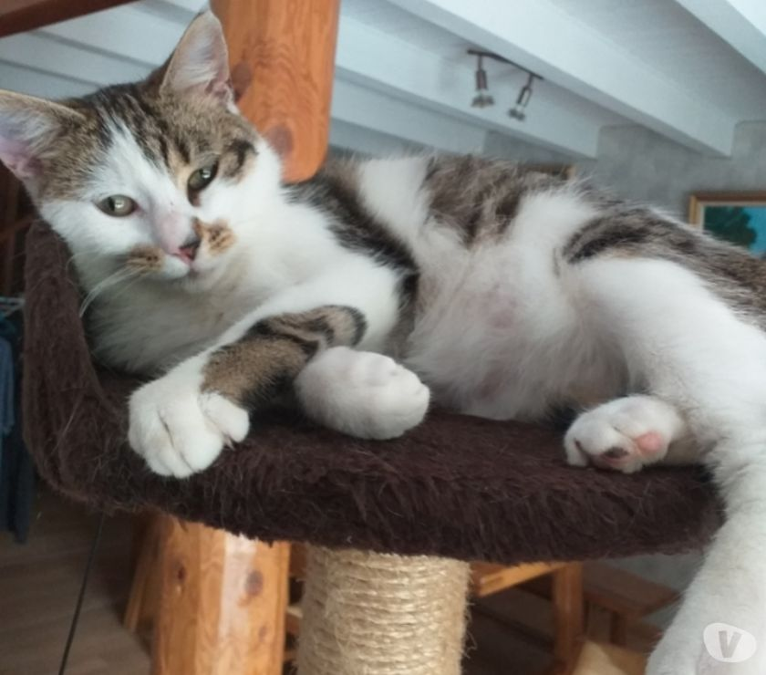 Photos Vivastreet Mayo, 8 mois, un amour de chat!