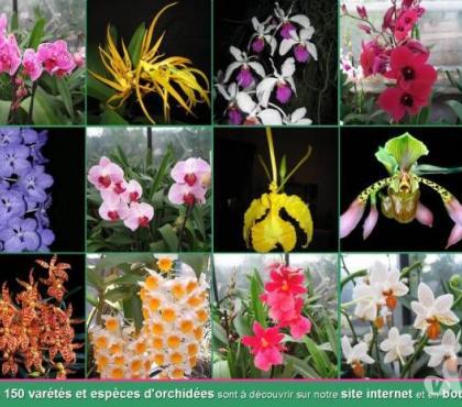 Photos Vivastreet Orchidées, Tillandsia, Cactées, Carnivores (74)