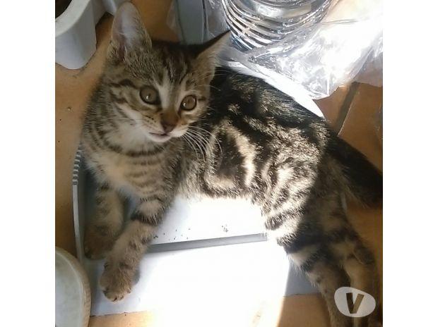 donne adorables chatons de 2 mois adoption don animaux corbeil essonnes 91100 avec vivastreet. Black Bedroom Furniture Sets. Home Design Ideas