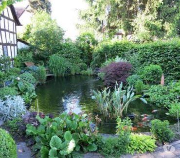 Photos Vivastreet plantes bassin 15 sortes