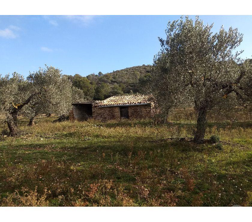 Vente Terres Agricoles Espagne - Photos Vivastreet Oliveraie catalogne