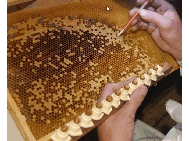 Photos Vivastreet recherche apiculteur confirmé.