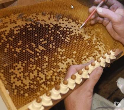 Photos Vivastreet recherche apiculteur confirmé