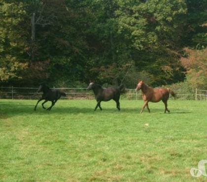 Photos Vivastreet Espace de broutage pour chevaux, ânes, mulets...