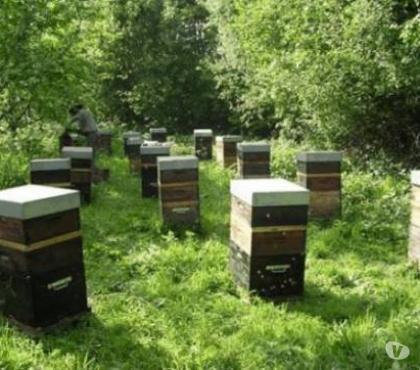Photos Vivastreet reprise des cours d apiculture