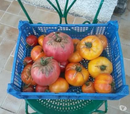 Photos Vivastreet Graines de tomates variétés anciennes et autres