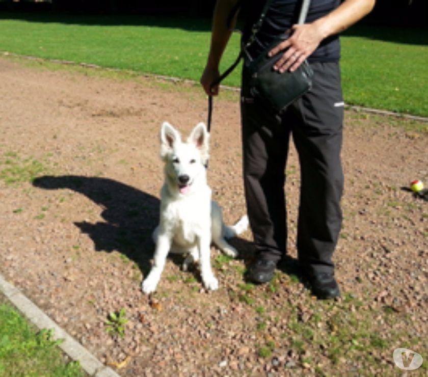 Photos Vivastreet éducateur canin