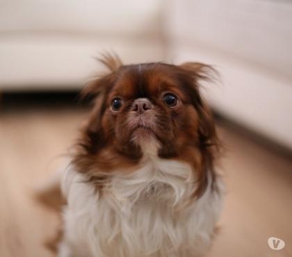 Photos Vivastreet Mon chien a peur de tout - accompagnement personnalise