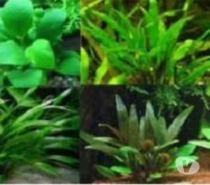 Photos Vivastreet poisson aquarium guppy molly crevettes