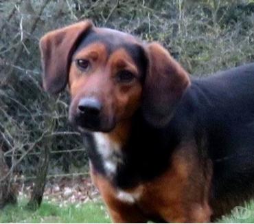 Photos Vivastreet FLIP, petit bout de chien, est à l'adoption!