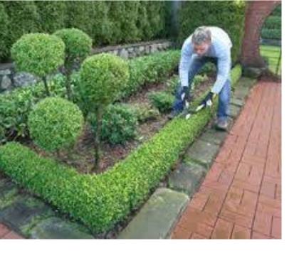 Photos Vivastreet entretien de jardin