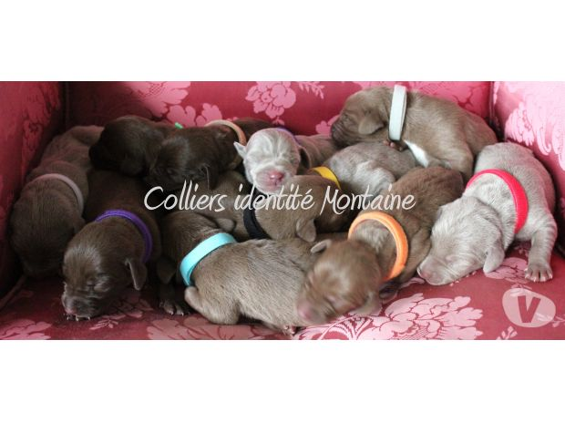 Photos Vivastreet 12 Colliers d'identification CHIOTS & CHATONS. NEUF. PORT 0