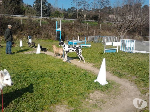 Photos Vivastreet CENTRE DE DRESSAGE ET D'EDUCATION CANINE