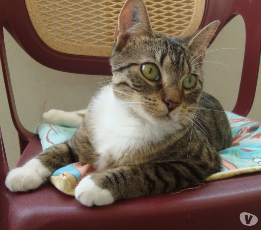 "Photos Vivastreet A ADOPTER ""SWEETY"" CHATTE NON LOF (DON)"