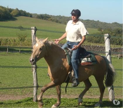 Photos Vivastreet Travail des chevaux