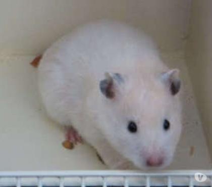 Photos Vivastreet je recherche des hamsters