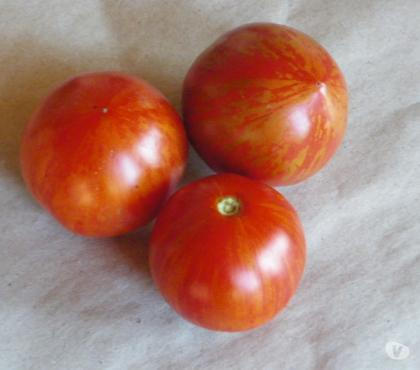 Photos Vivastreet graines de tomate Red Zebra