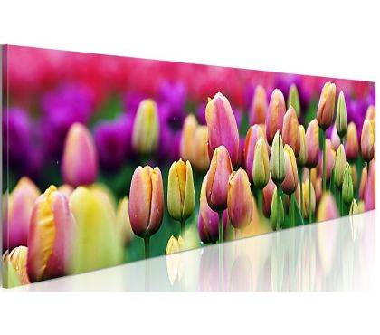 Photos Vivastreet tableau panoramique champs tulipes de couleurs 120x40 cm