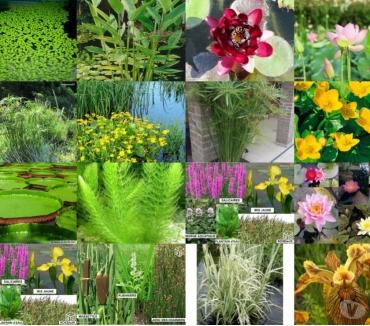 Photos Vivastreet Plante d'eau au jardin du lavoir