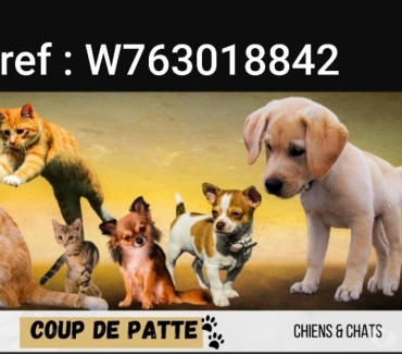 Photos Vivastreet Recherche de benevole protection animale