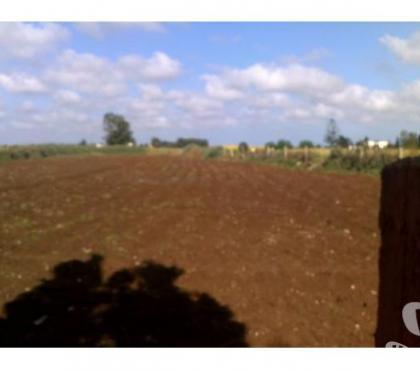Photos Vivastreet Terrain agricole titré et borné région de Marrakech 2,5ha
