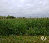 Photos Vivastreet Donne herbe fourrage de très belle qualité