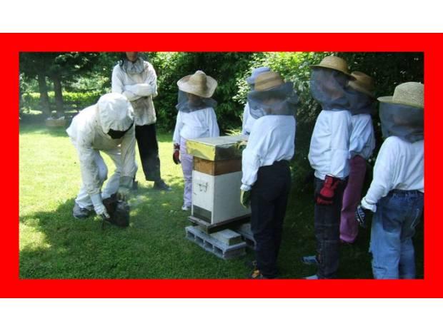 Photos Vivastreet visite de nos ruchers