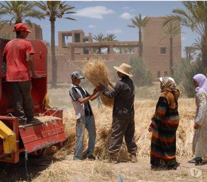Photos Vivastreet Location Villa 8 chambres avec Piscine dans palmeraie