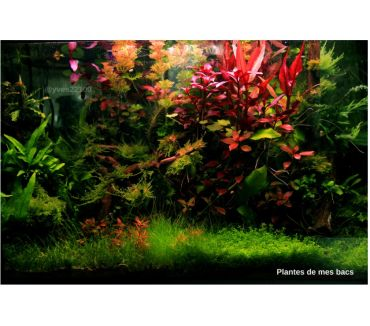 Photos Vivastreet Plantes pour poissons d'aquarium