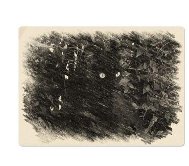Photos Vivastreet Carte postale neuve Photo Chat noir