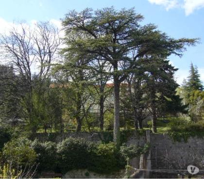 Photos Vivastreet Loue Grand T1 Meublé Centre Ville PRIVAS 07000 F1