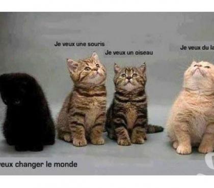 Photos Vivastreet Chatons, chats noirs... des mal aimés porte-bonheur !Don