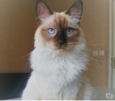 Photos Vivastreet Toutouyoutou : services de visite d'animaux à domicile