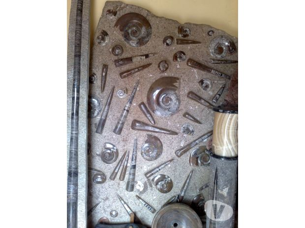 Photos Vivastreet Plaque de fossile d'ammonite et orthocere 180 x 100 cm