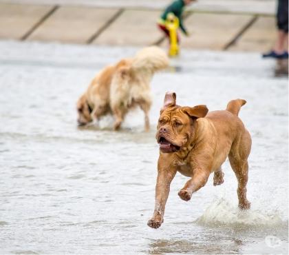 Photos Vivastreet Canivacances d'été tourisme et stages canins