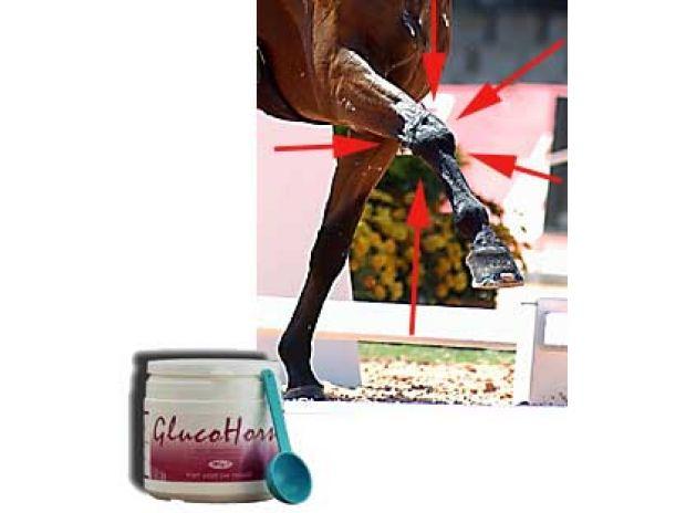 Photos Vivastreet Pour les articulations de votre cheval : GlucoHorse ! Promo!