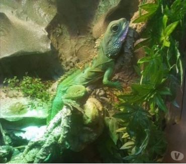 Photos Vivastreet Terrarium complet avec couple dragons d'eau